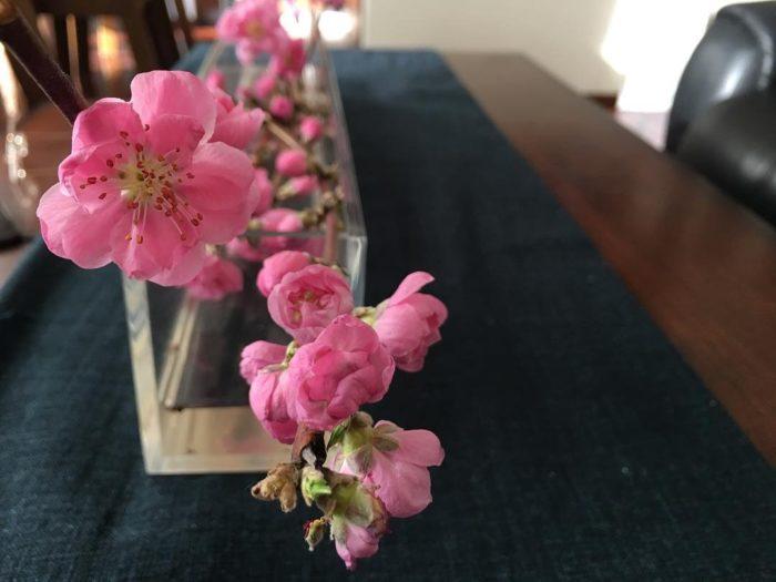 花・植物の撮影のポイント
